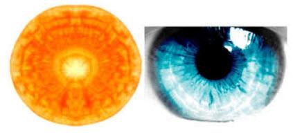 astuces de grand mere carottes-yeux